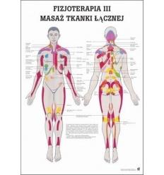 """Tablica anatomiczna """"Fizjoterapia III"""" Plansza anatomiczna"""