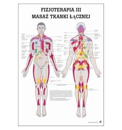 """Tablica anatomiczna """"Fizjoterapia III"""" Plansz anatomiczna"""