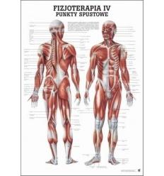 """Tablica anatomiczna """"Fizjoterapia IV"""" Plansza anatomiczna"""