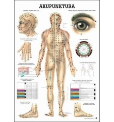 """Tablica anatomiczna """"Akupunktura"""" Plansza anatomiczna"""